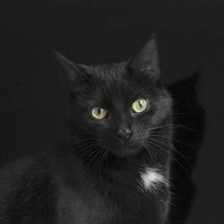 Schwarze Katze vor schwarzem Hintergrund