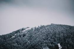Moody Forest covered in snow