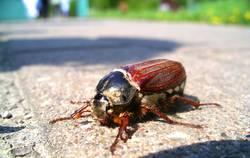 My Käfer