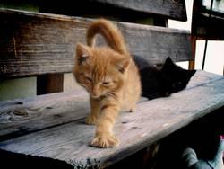 die Waffen einer Katze