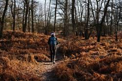 Wanderung durch Farn und Wald