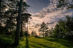 Waldlichtung in Abendstimmung