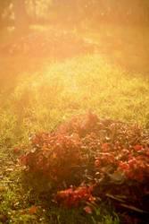 Herbstlaub | Sonne