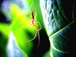 Spinne | Grün