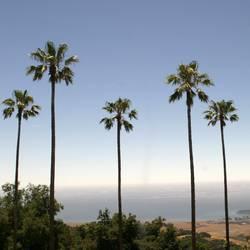 Aussicht | Palmen