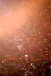 Winter | Sonne