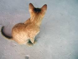 Blonde Katze