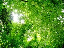 Grüne Blätterdecke