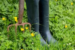 Old Garden Fork and Rubber Boots with Weeds and Wild Flowers