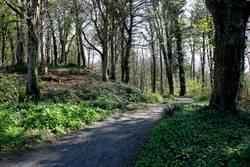 Woodland Footpath on a Spring Morning