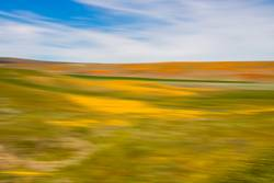 Vivid Yellow Orange Green and Blue in Abstract Wildflower Blur