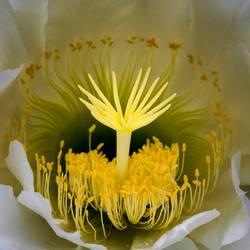 Intricate Shapes Macro Night Blooming Cactus Flower