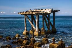 Seabirds on Crumbling Pier in Monterey California Seascape