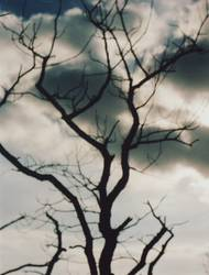 cloud/\tree