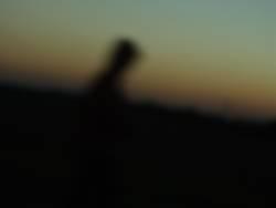 Der unscharfe Jogger