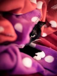 Kätzchen mit Pünktchen
