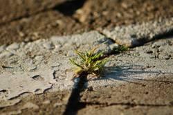 Leben im Stein