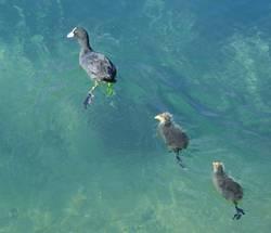 drei schwimmer