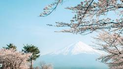 Mt Fuji with Cherry Blossom