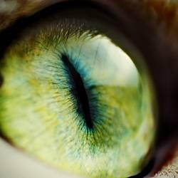 Das Auge des Pixelkönigs