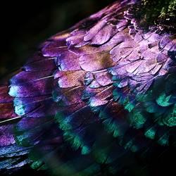 Spektralkleid