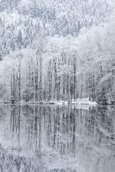 Weißer Uferwald