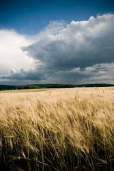 Felder um Mühlacker