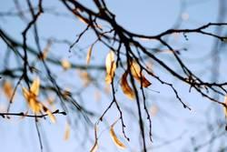 Herbstreste