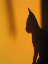 Schattenkatze