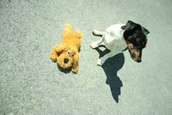 Dog On Asphalt