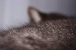 Let Fur Sleep