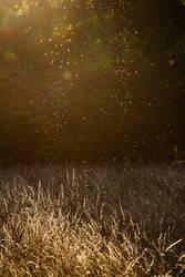Sommerwiese mit Mücken