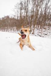 Wilder Hund 02