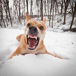 Wilder Hund 03