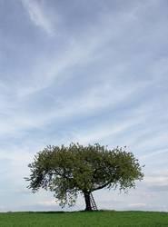 Der Baum 6