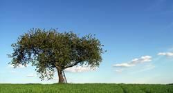 (mal wieder) der Baum 7