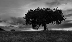 Der Baum 9 (am Abend vor dem großen Regen)
