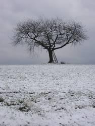 Der Baum 4