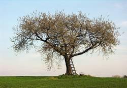 Der Baum im Frühling