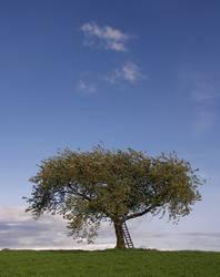 Der Baum 8