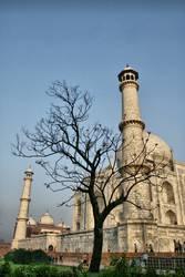 Taj Mahal Baum
