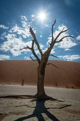 wüste Zeiten