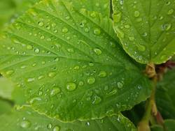 dewdrops; Weed; Water; Structure; Dew; Raindrops