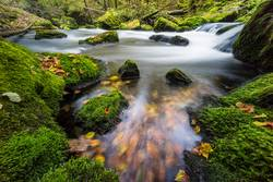 Herbstfarbenim Fluss bei langer Belichtung