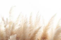 Abstract natural background of soft plants moving in the wind.