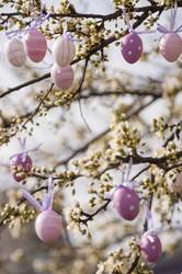 Purple easter eggs hanging on a blooming plum tree