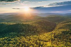 Sonnenstrahl über dem Wald
