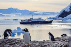 Gentoo penguins standing on the rocks and cruise ship