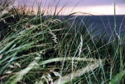 Gras am Meer