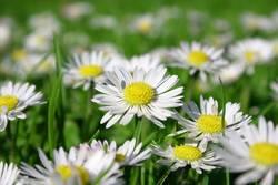 frisch, frischer, Frühling
